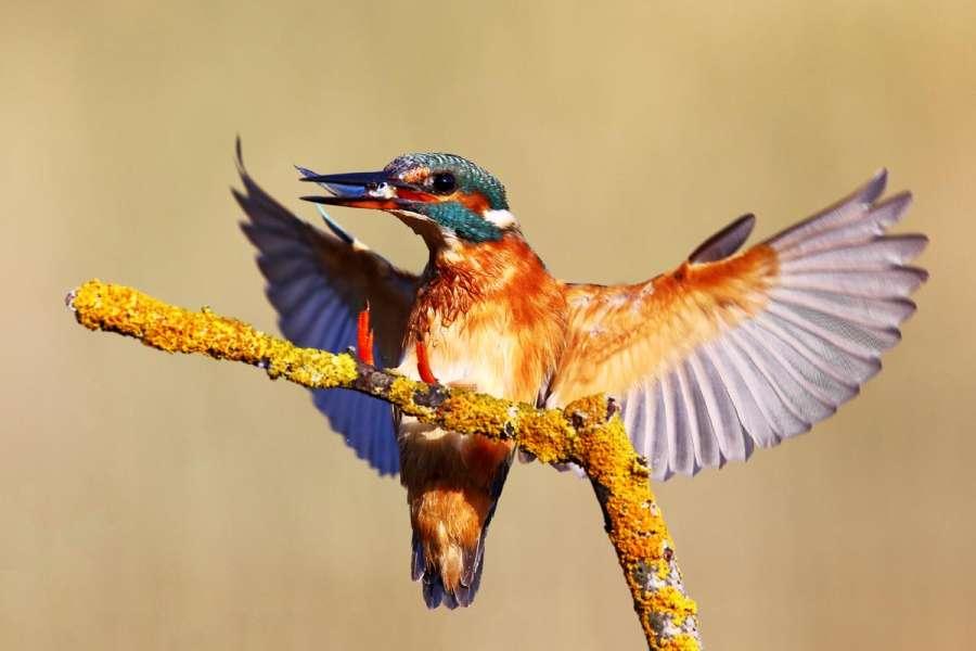 BIRDWATCHING AT CAMP VRANSKO LAKE IN NATURE PARK